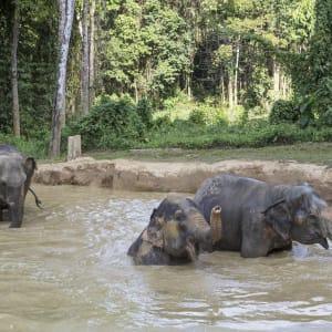 Elephant Hills - 2 Tage ab Phuket: Elephant Hills