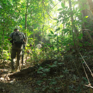 Elephant Hills & Rainforest Camp, Khao Sok Soft Adventure de Phuket: Elephant Hills Jungle Trek