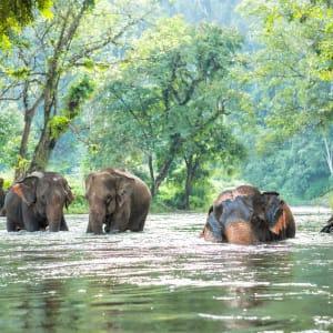 Erlebnis Südthailand ab Bangkok: Elephants taking a bath