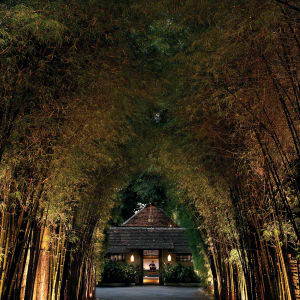 Tamarind Village in Chiang Mai: Bamboo Entrance