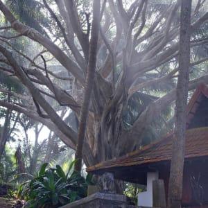 Niraamaya Retreats Surya Samudra à Kovalam: Beautiful tree