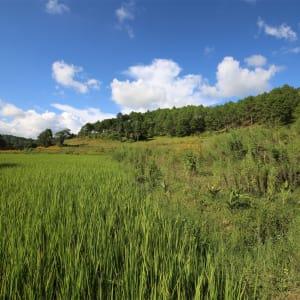 Randonnées dans le pittoresque Etat Shan (3 jours) de Lac Inle: exterior: Farm land