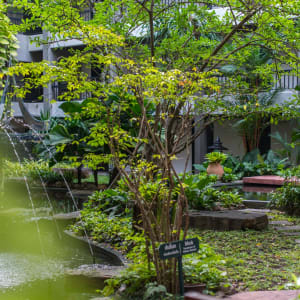 Siam Bayshore in Pattaya: Garden