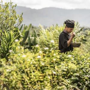 Anantara Golden Triangle Elephant Camp & Resort à Triangle d'Or: Herb Garden Chef