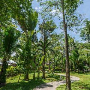 Peace Resort à Ko Samui: In the Garden