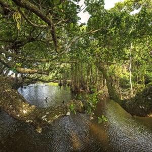 Wa Ale in Mergui Archipel: Mangrove River