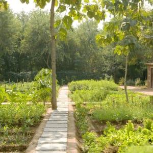 Aman-i-Khas à Ranthambore: Organic Garden