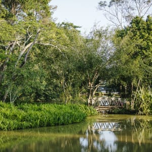 Anantara Golden Triangle Elephant Camp & Resort à Triangle d'Or: Pond