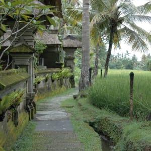 Alam Jiwa in Ubud: Ricefields