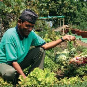 Glenburn Tea Estate à Darjeeling: Fresh Veggies from our Kitchen Garden