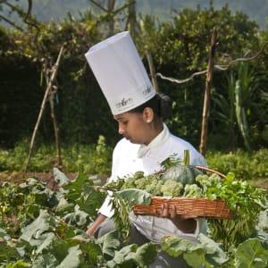 Spice Village in Thekkady: Organic Farm