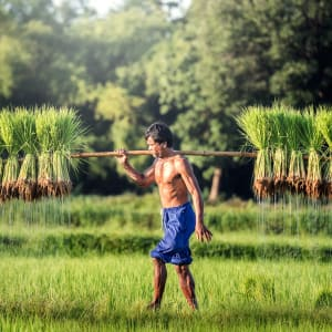 Höhepunkte Thailands ab Bangkok: Farmer
