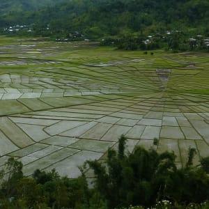 Flores - Traditionen, Riten und Vulkane ab Ende: Flores Ruteng Spiderweb rice field