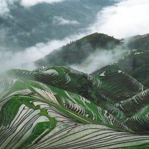 Reisterrassen & Bizarre Berglandschaften ab Guilin: Guilin: Rice terraces