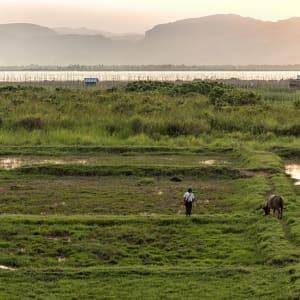 Tour à vélo à travers le pays doré de Yangon: Inle Lake farmer with buffalo at sunset