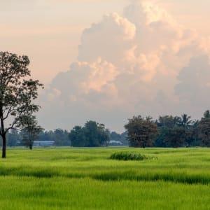 I-San - le trésor caché / BKK-Siem Reap de Bangkok: Isaan rice field