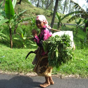 Java-Bali für Geniesser ab Yogyakarta: Java farmer