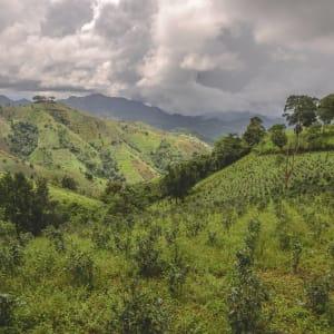 Randonnées dans le pittoresque Etat Shan (4 jours) de Lac Inle: Kalaw Tea Plantation