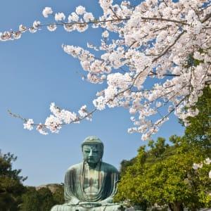 Circuit en groupe «Geisha» de Tokyo: Kamakura: Sakura and Daibutsu