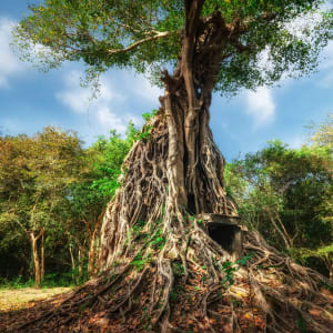 Von Angkor nach Phu Quoc ab Siem Reap: Kampong Thom - Sambor Prei Kruk Temple