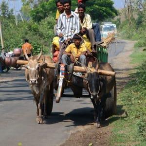 Le sud diversifié de l'Inde de Kochi: Karnataka: farmers on the road