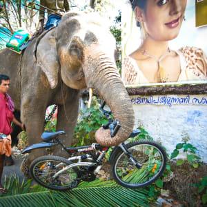Tour à vélo à travers le Kerala de Kovalam: Kerala Biking Tour