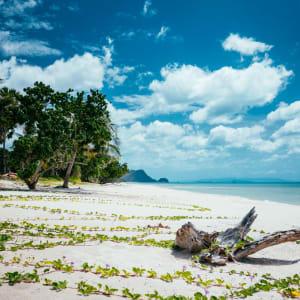 Von Küste zu Küste im Süden Thailands ab Krabi: Khanom palm trees and a root on a lonely beach with white sand and blue water