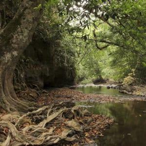 Natur & Kultur rund um Bangkok: Khao Yai National Park:
