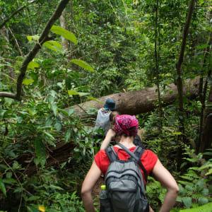 Nature & culture autour de Bangkok: Khao Yai national park - Tourists hiking in the deep jungle