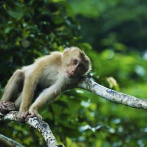 I-San - le trésor caché / BKK-Siem Reap de Bangkok: Khao Yai Nationalpark: Monkey