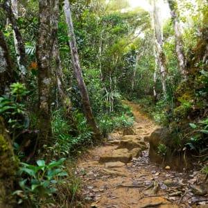 Les hauts lieux de Bornéo option longhouse de Kuching: Kinabalu Park: Nature rain forest with morning sunlight
