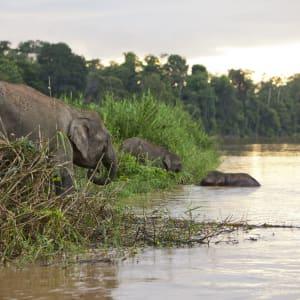 Borneo Wildlife / Tabin Wildlife Reserve ab Kota Kinabalu: Kinabatangang River