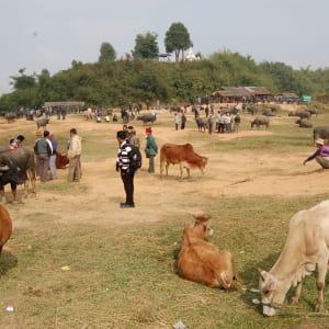 Tribus montagnardes de Kyaing Tong: Kyaing Tong cattle market