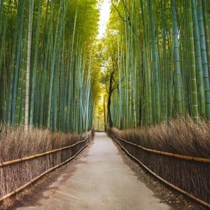 Les hauts lieux du Japon avec prolongation de Tokyo: Kyoto Bamboo Forest in Arashiyama