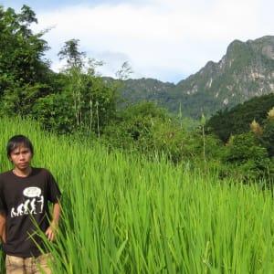 Bergstämme und Natur in Nord-Laos ab Luang Prabang: Laos trekking