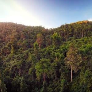 Bungaraya Island Resort à Kota Kinabalu:  In the Jungle