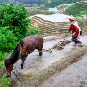 Rizières du cieletreliefs étranges de Guilin: Longsheng farmer with horse