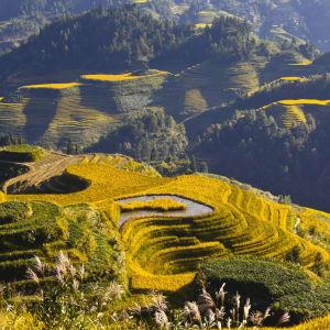 Reisterrassen & Bizarre Berglandschaften ab Guilin: Longsheng: Rice Terraces
