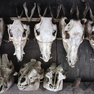 Nord-Luzon Rundreise ab Manila: Luzon Banaue skulls