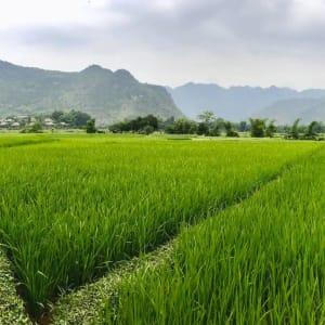 Impressionen Nordvietnams ab Hanoi: Mai Chau Rice Fields