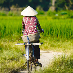 Le fascinant delta du Mékong - de/à Saigon: Mekong Delta Chau Doc Local woman working and riding bicycle on rice field