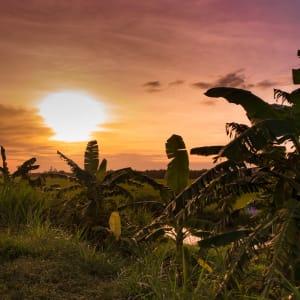 Faszinierendes Mekong Delta - ab/bis Saigon: Mekong Delta Sunset