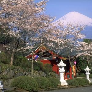 Circuit en groupe «Fuji» de Kyoto: Mt: Fuji: cherry blossom