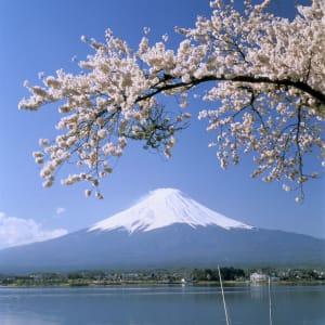 Au pays du soleil levant de Tokyo: Mt. Fuji: with lake and cherry blossoms