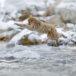 Circuit en groupe «Geisha» de Tokyo: Nagano Snow Monkey