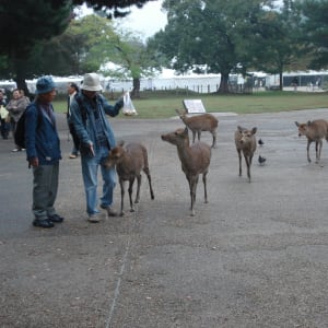 Excursion à Nara – l'après-midi à Kyoto: Nara