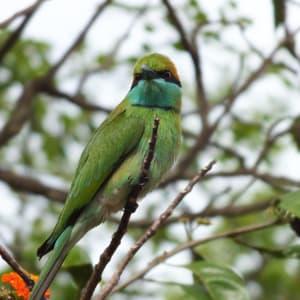 Les hauts lieux du Sri Lanka de Colombo: National Park: Bird