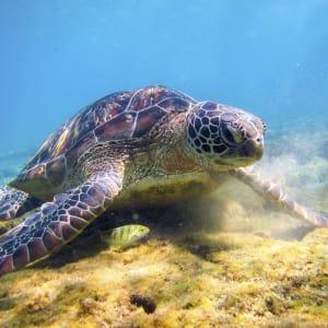 Inselwelt Visayas ab Negros: Negros Apo Island Underwater