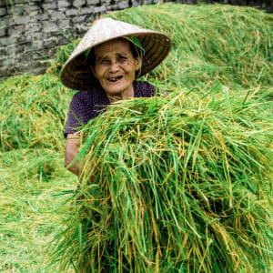 Impressionen Nordvietnams & Halong Bay Kreuzfahrt ab Hanoi: Ninh Binh