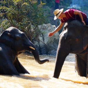 Natur & Elefanten im Norden Thailands ab Chiang Mai: Northern Thailand: Elephants taking a bath